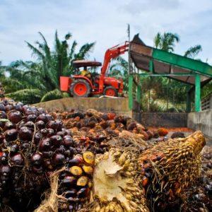 lewat sawit indonesia bangkit