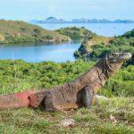 Pulau Komodo - Salah Satu Kekayaan Wisata Indonesia