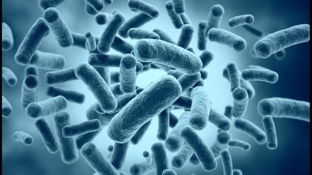 bakteri jerawat