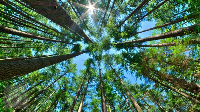 Manfaat Pohon Bagi Kehidupan Manusia