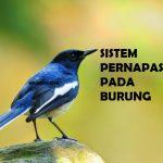 Mengenal Sistem Pernapasan pada Burung