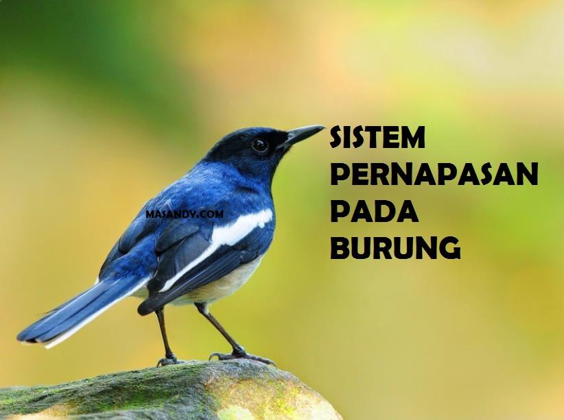 Sistem Pernapasan Burung