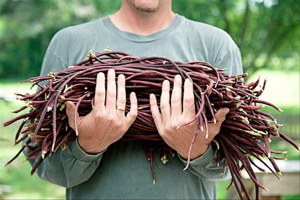 manfaat kacang panjang merah